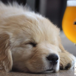 Bounce Animal rescue_ Maxline Brewery