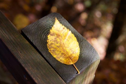 leaf-fall-foliage